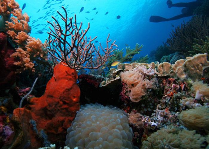 Dia internacional da biodiversidade