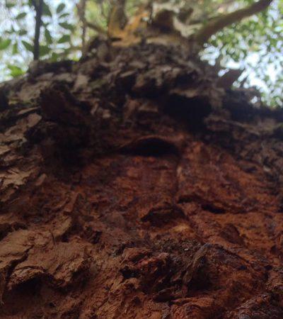Dia da Árvore no Parque Estadual Campos do Jordão